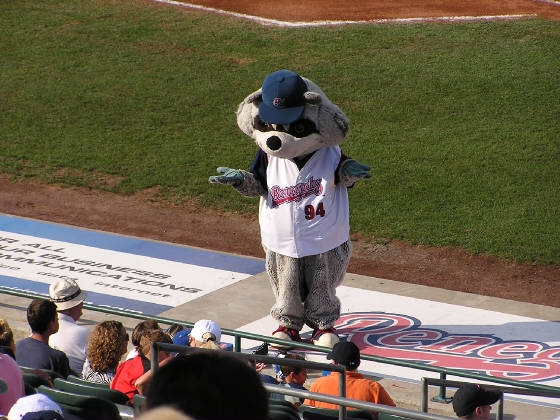 Rascal the Raccoon gets the crowd roaring at Dutchess Stadium.