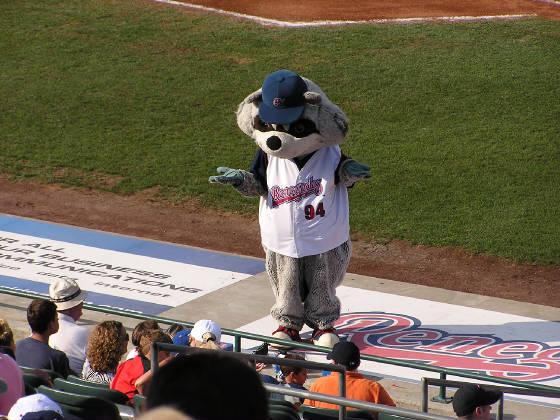 Rascal the Raccoon gets the crowd roaring at Dutchess Stadium.